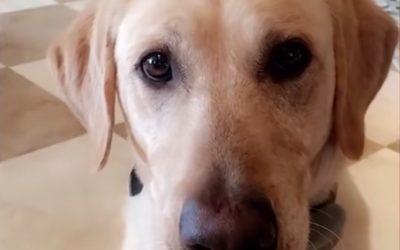 Cyanide device explodes, killing family's dog